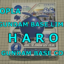BUILD HARO LIMITED ハロプラ ハロ 限定品